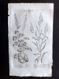Hill & Culpeper 1792 Antique Botanical Print Garlick Hedgeweed, Treacle Wormseed